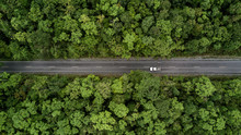 Road Through The Green Forest,...