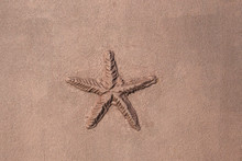 Sculpture, Decor And Bas-relief Concept - Starfish In The Wall