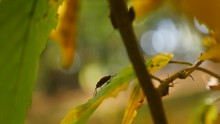 Bugs Soldiers On A Leaves In T...