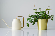 Home Plant In A Gold Pot, Watering Can, White Background, Space For Text