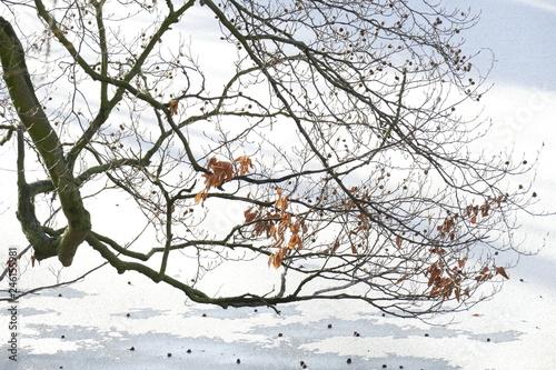 Fotografia  Eisfläche auf einem zugefrorenen See
