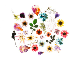colorful flowers on the white background