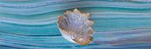 Decorative Sea Shell On Sea Tile Background
