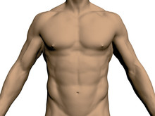 Nude Male Torso