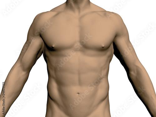 Obraz na płótnie Nude male torso