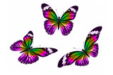 set of colored tropical butterflies isolated on white background