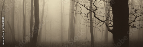 mysterious-forest-panorama-tree-in-foggy-forest