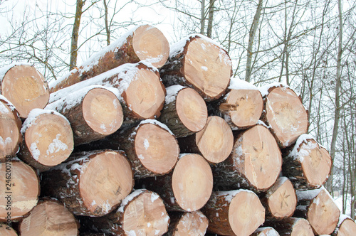 Photographie  Logs lying in a pile in winter