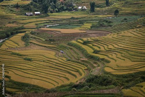 Garden Poster Rice fields vietnam
