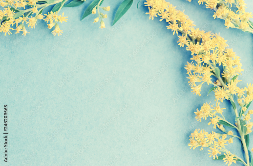 Fototapeta Summer yellow wild flowers on blue background. Springtime floral. Flat lay, top view, copy space.