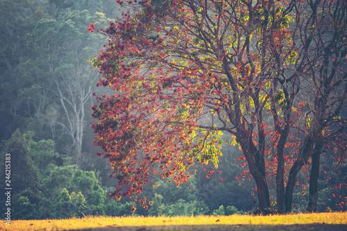 drzewo-z-kolorowymi-liscmi