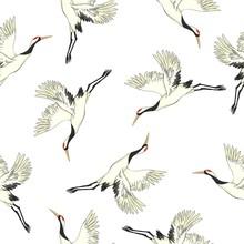 Crane Birds Vector Illustration