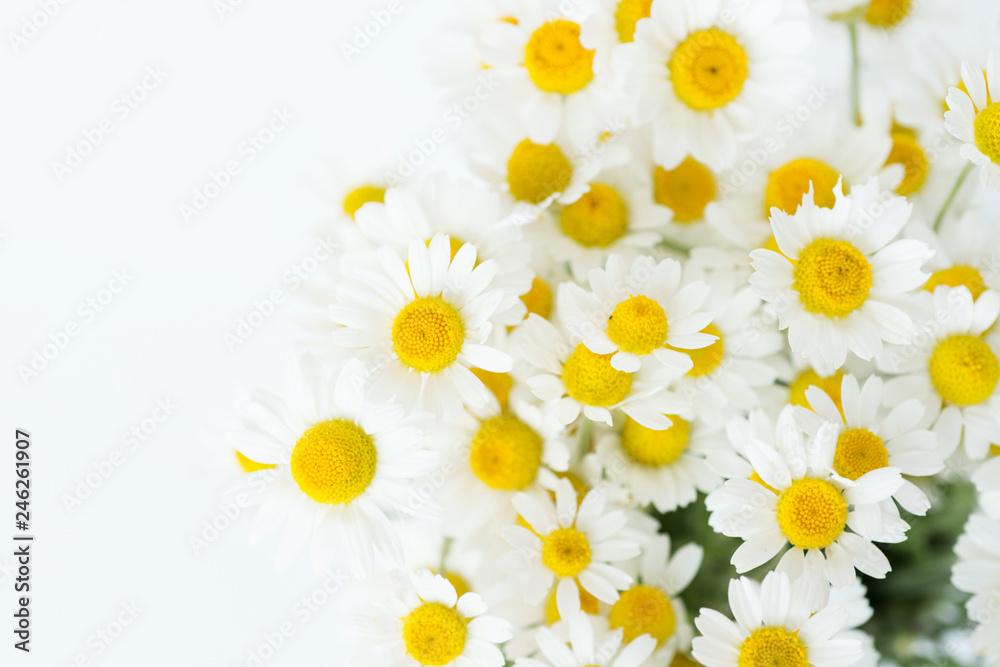 Fototapeta Chamomile or daisy flowers on white background.