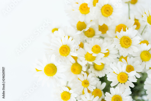 Photo sur Aluminium Marguerites Chamomile or daisy flowers on white background.