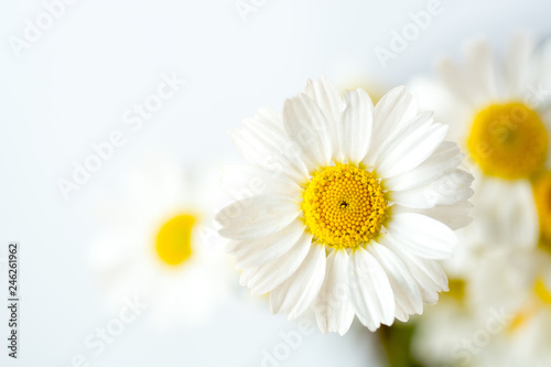 Foto Chamomile or daisy flowers on white background.