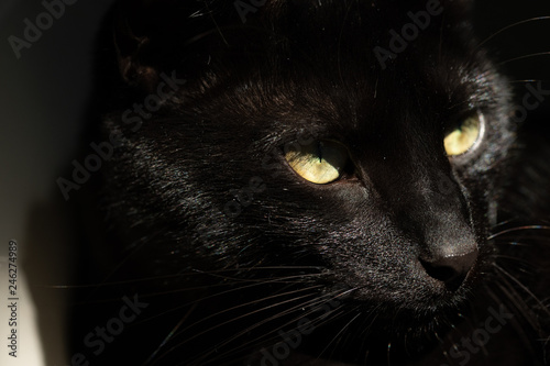 Canvas Prints Panther Close up high resolution macro photograph of a cat face and eye