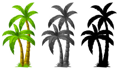 Set palmi