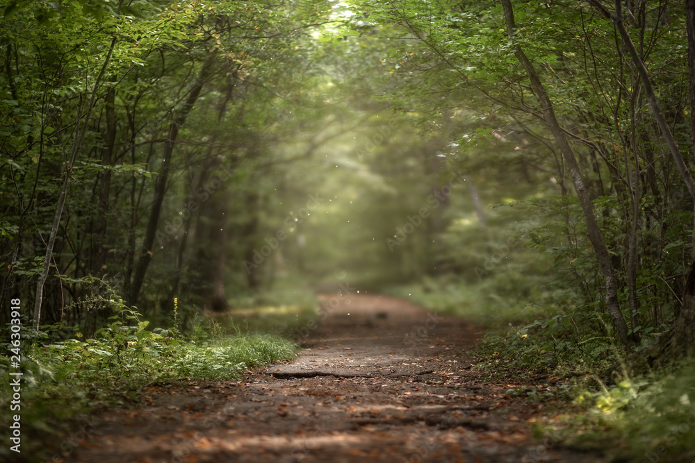 Fototapeta Beautiful green summer forest. Spring background, backdrop