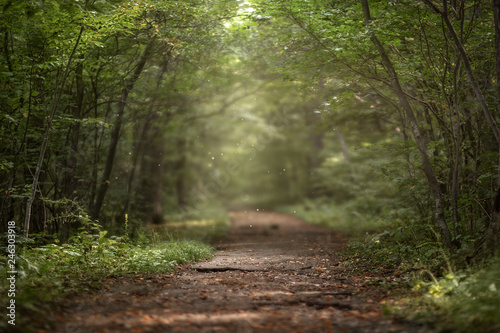 Canvas Print Beautiful green summer forest. Spring background, backdrop