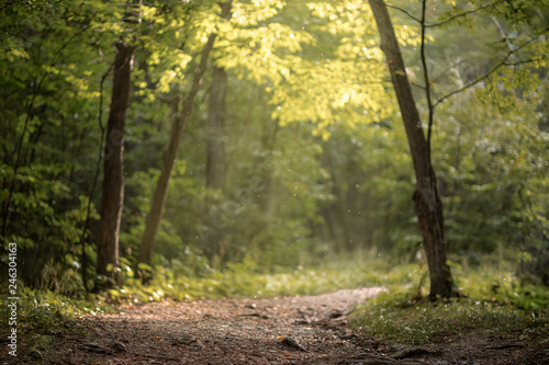 Papiers peints Route dans la forêt Beautiful green summer forest. Spring background, backdrop