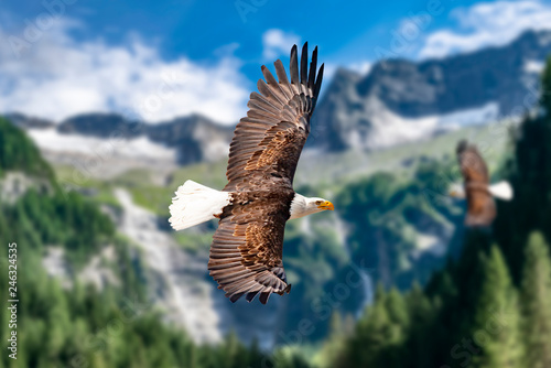 Foto  Zwei Weißkopfseeadler fliegen in großer Höhe am Himmel und suchen Beute