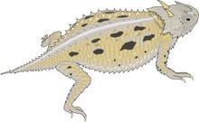 Horned Toad Vector Illustration