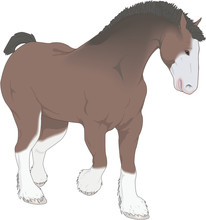 Clydesdale Standing Vector Ill...