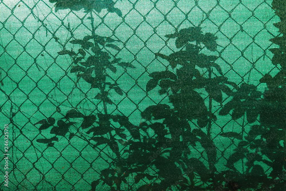 Fototapeta Silhouette delle piante attraverso la ramina da giardino
