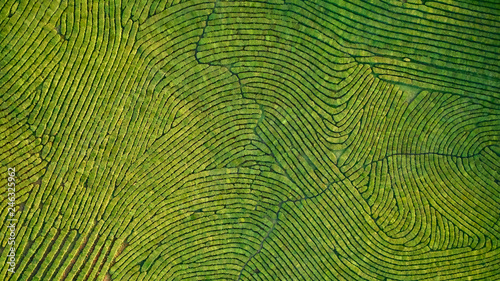 Fotografia Aerial view shot from drone of green tea plantation, Top view aerial photo from