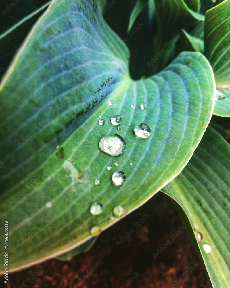 Fototapeta green leaf with drops of water