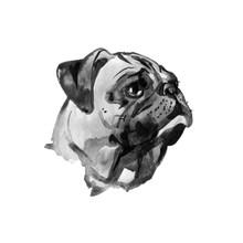 Watercolor Dog Pug Portrait - Hand Painted Illustration Of Pets