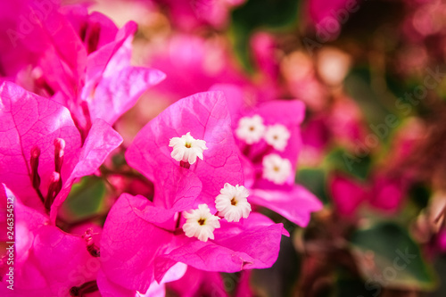 Poster Rose Beautiful flowers on the sea background