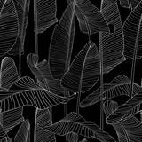 Pięknej drzewko palmowe liścia sylwetki tła Bezszwowa Deseniowa ilustracja EPS10. Białe linie na czarnym tle. - 246375541