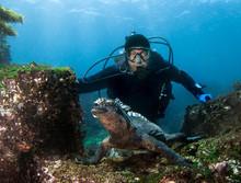 Scuba Diver Observes Marine Ig...