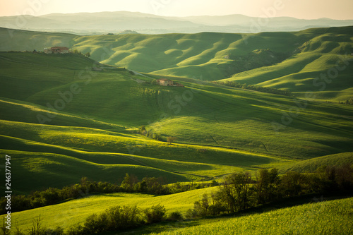 Canvas Prints Honey Tuscany landscape in spring green meadows of italia