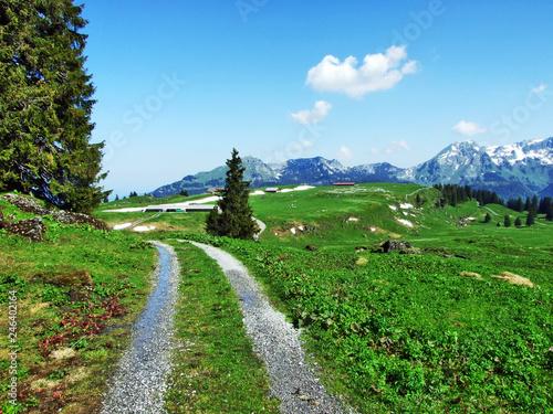 Deurstickers Groene Alpine pastures and meadows on the slopes of Churfirsten mountain range - Canton of St. Gallen, Switzerland