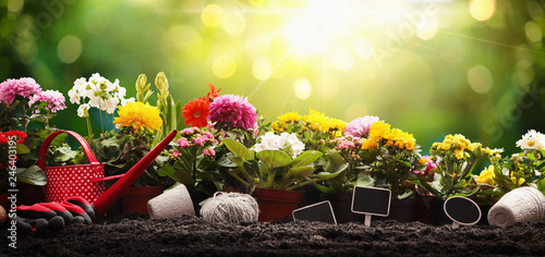 Poster Jardin Garden Flowers, Plants and Tools on a Sunny Background. Spring Gardening Works Concept