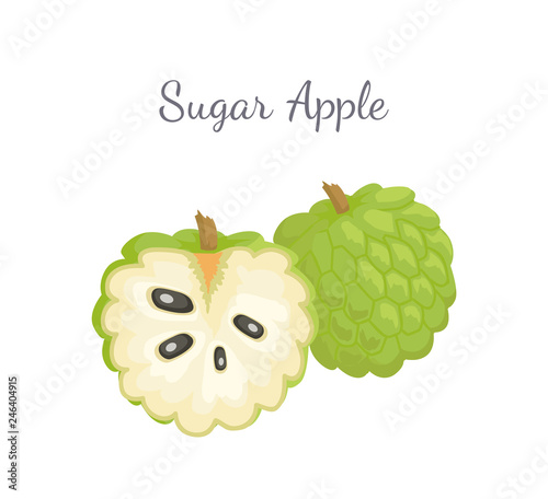 Canvas Print Sugar-apple, sweetsop, or custard apple, Annona squamosa, exotic juicy fruit whole and cut vector isolated