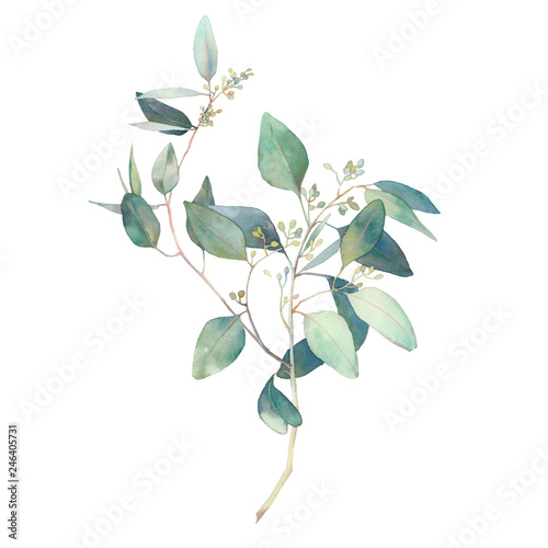 Watercolor eucalyptus branches with round leaves. Hand painted botanical illustration isolated on white background. Fototapete