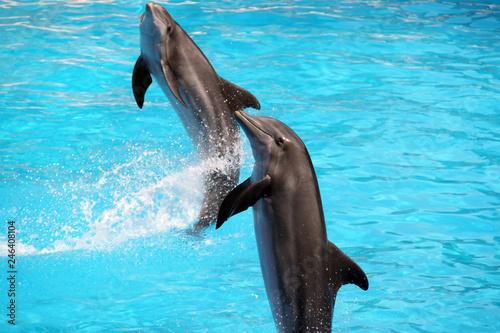 Plakat delfin w niebieskiej wodzie
