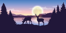 Two Reindeers By The Lake At N...