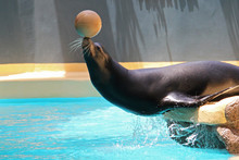 Navy Seal With A Ball