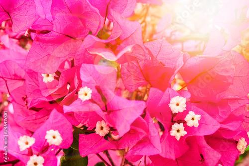 Spoed Fotobehang Roze Beautiful flowers on the sea background