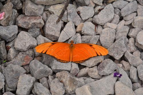 Fotografie, Obraz  Sanctuaire papillons El Valle de Anton Panama - Butterfly Sanctuary Panama