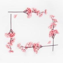 Coral Color Spring Blossom Flo...