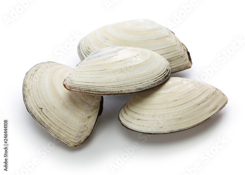 saragai (northern great tellin clam), japanese seafood isolated on white background