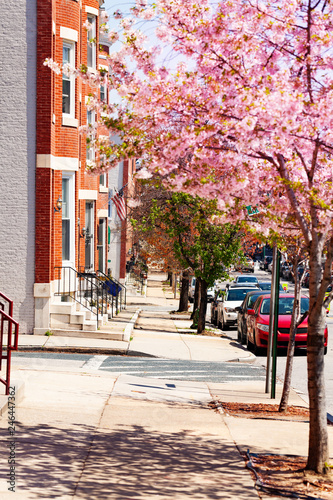 Fotobehang Amerikaanse Plekken Sidewalks of Baltimore in spring, Maryland, USA