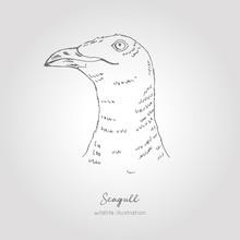 Realistic Hand Drawn Vector Sketch Of Seagull Head Profile View. Nordic Bird Illustration.