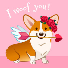 """Valentine's Day Corgi Dog Card. Cute Cupid Welsh Corgi Puppy In Love, With Wings, Red Rose Wreath On Head, Holding Pink Heart Arrow In Mouth, With Text """"I Woof You!"""" On Pastel Pink Background."""