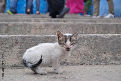 Photo  Gato blanco tuerto mirando al frente